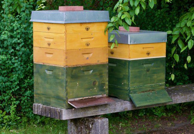 Bienenkasten_1