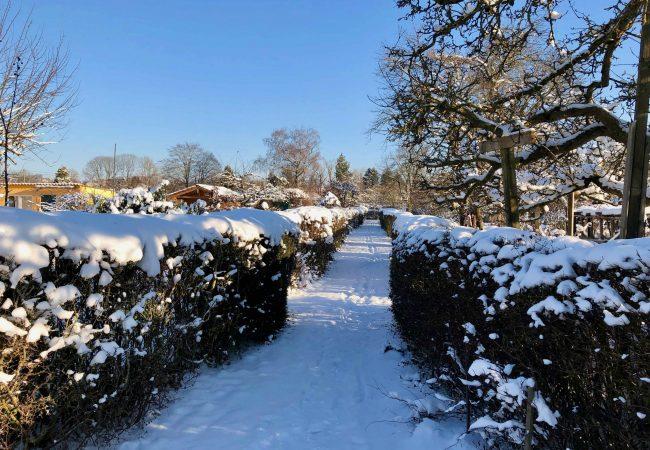 Winterimpressionen aus der Kleingartenanlage